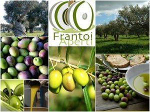 frantoi-aperti-olio-umbria-10